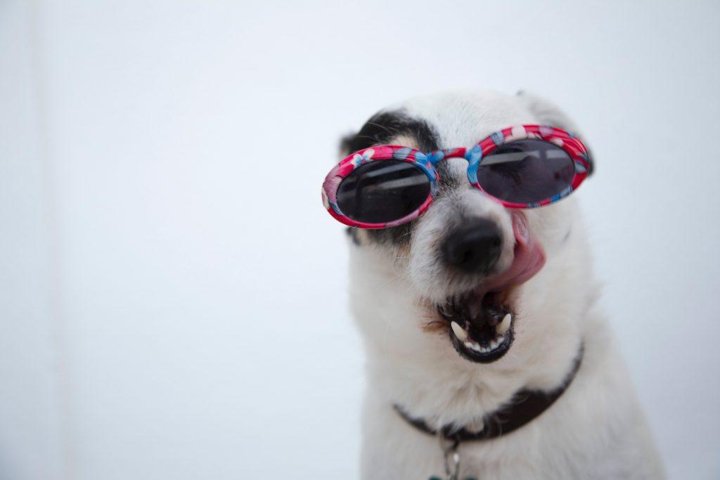 adorable animal animal photography 1629781 at omgloh.com