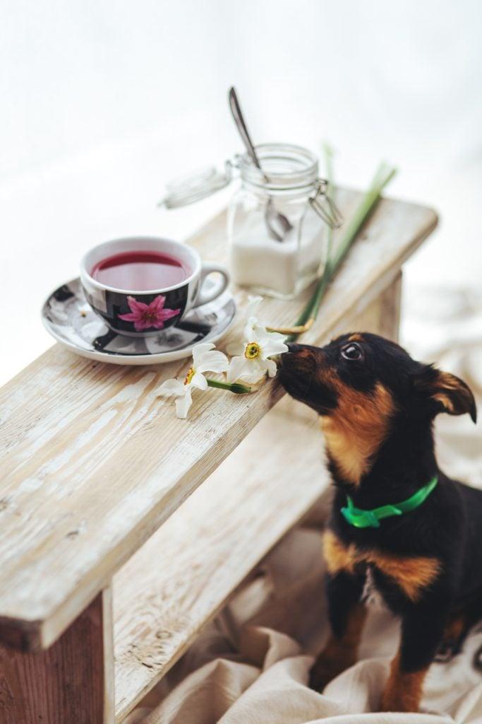 animal cute dog 5801 at omgloh.com